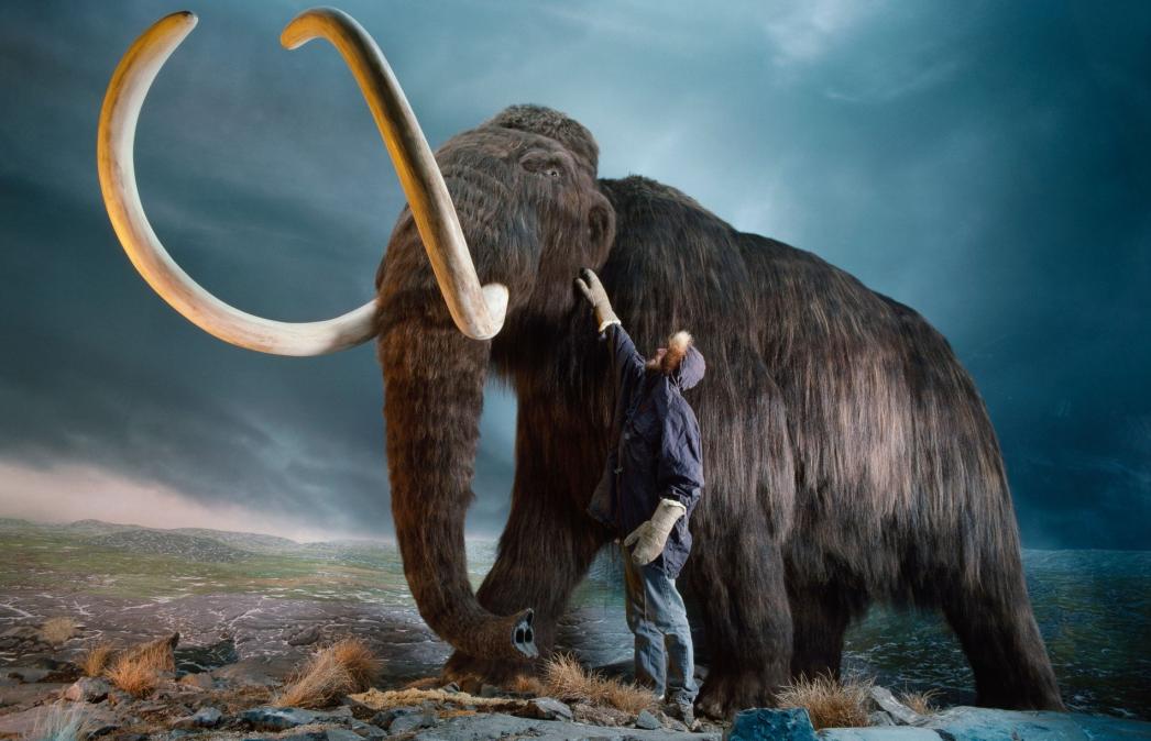 Científicos buscan revivir en laboratorio a mamuts lanudos y devolverlos al Ártico