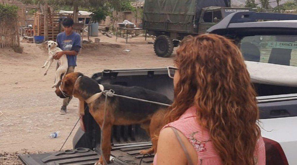 Trabajaron en la relocalización de los vecinos de Zonda para evitar el abandono de animales