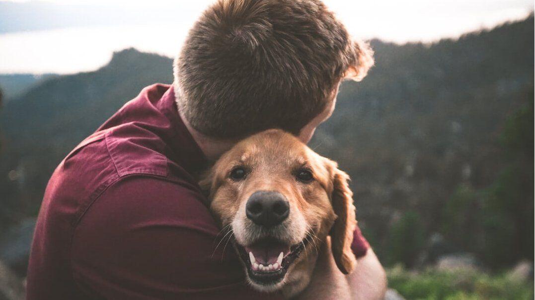 Por qué se celebra este 2 de junio el Día Nacional del Perro