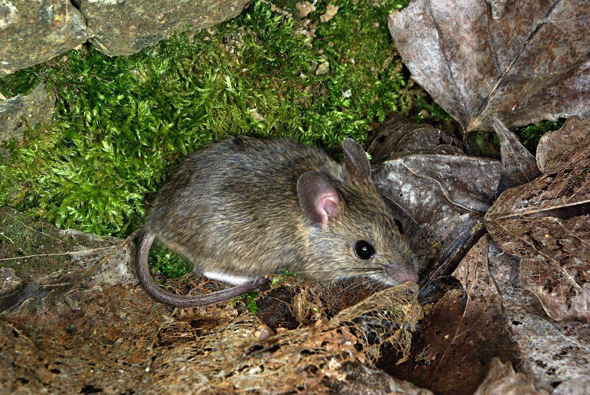 Una persona tomó mate con un ratón dentro del termo.